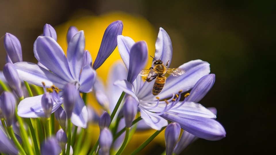 une_abeille_guêpe