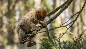 Visiter la Forêt des Singes